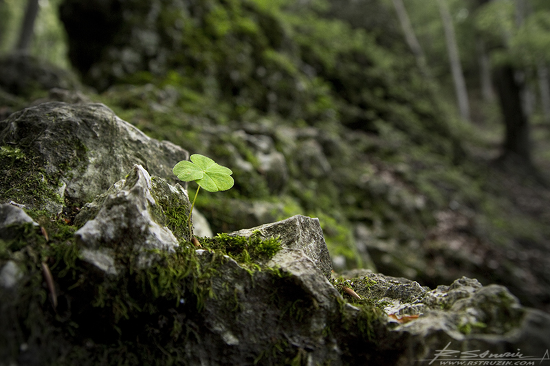 Ojców. Koniczynka na skale... pieskowej, ma się rozumieć. Jaki fotograf, taki koniczynek. Zielony i trzylistny. Ale mimo wszystko mam nadzieję, że choć trochę szczęśliwy... czego Wam i sobie z całego serca życzę